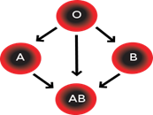 comparing the abo and rh blood group systems biology essay The four kinds of blood type showed the same risk for breast cancer in both the community and the hospital group in relation to rh factor blood group status, relative to rh negative (rh-) the or for rh positive (rh+) blood was 0948 (95% ci 0667–1348, p = 0095 for heterogeneity) in a random effect model (fig 3) and 0905 (95% ci, 0737–1111) in the fixed-effect model.